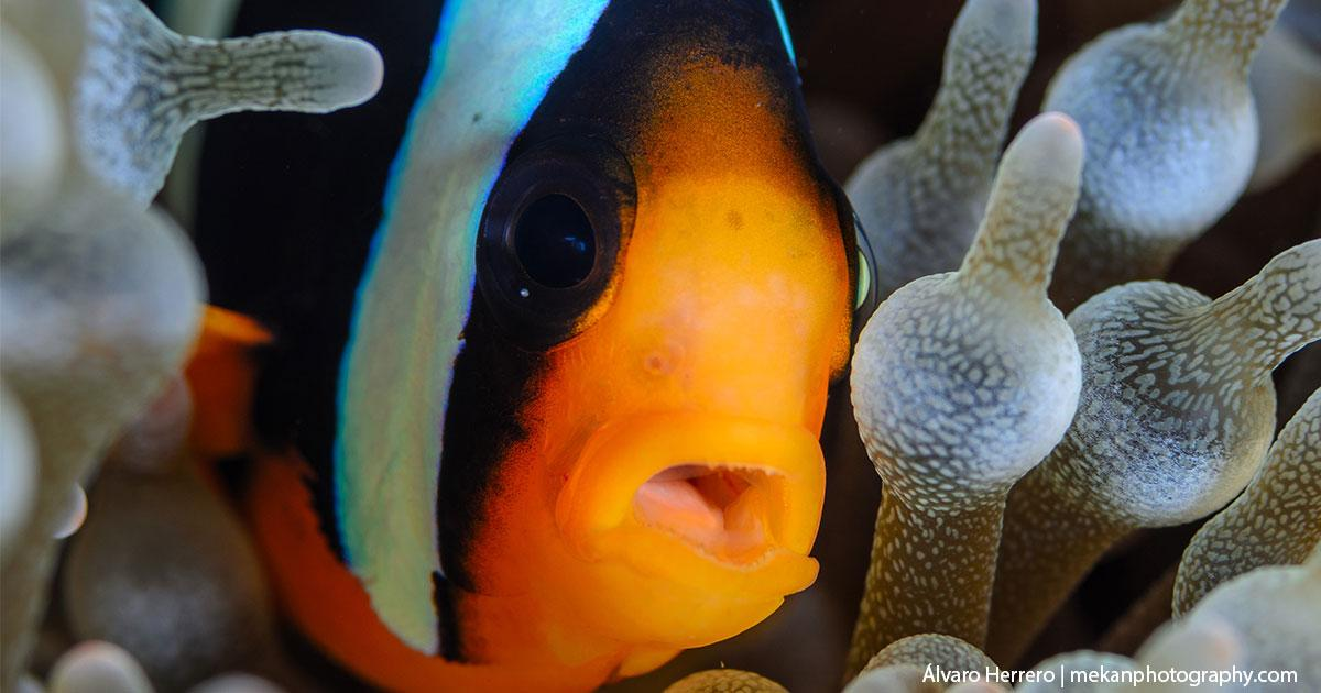 Some Interesting Facts About Clown Fish
