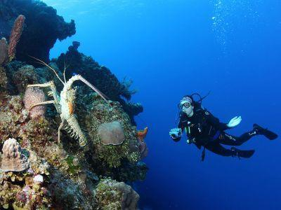 diver-at-Richelieu-Rock