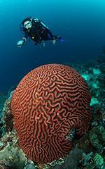Similan-Liveaboards-Thailand