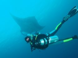 Diver-and-manta-ray