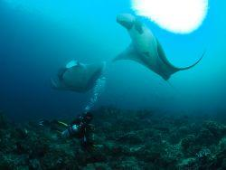 scuba-diving-with-manta-rays-similan-islands