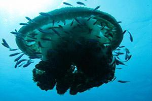 Hin-Daeng-scuba-diving-site-intro