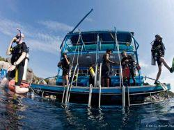 Liveaboard-diving-Dolphin-Queen-dive-platform