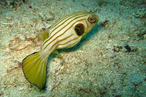 Phuket-dive-sites-intro