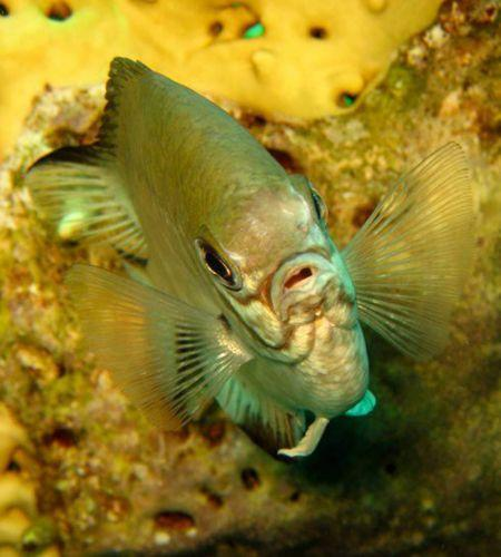 Fish-phuket-liveaboard-diving