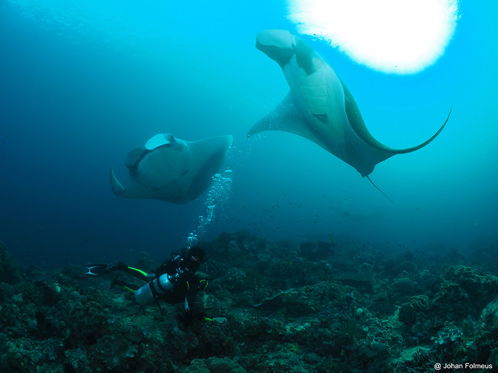 diver mantas Similan Islands live aboard blog